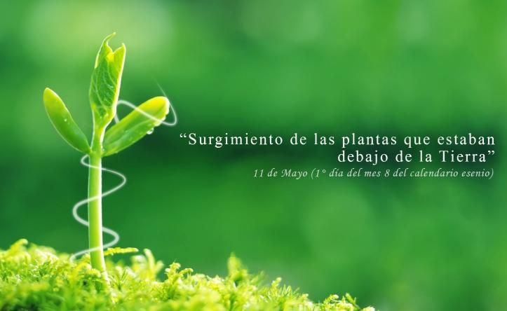 SURGEN LAS PLANTAS_MAYO1